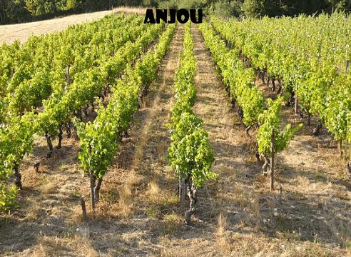 Anjou-vino-naturale-vino-artigianale-wine-boxes-freeshipping