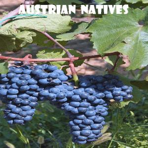 Autoctoni-austriaci-vino-naturale-vino-artigianale-wine-boxes-freeshipping
