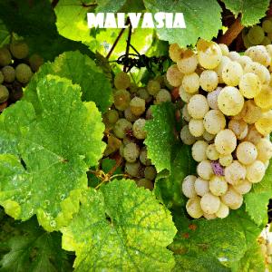 Malvasia-vino-naturale-vino-artigianale-wine-boxes-freeshipping