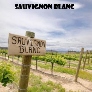 sauvignon-vino-naturale-vino-artigianale-wine-boxes-freeshipping