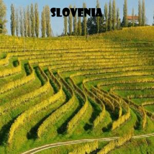 Slovenia-vino-naturale-vino-artigianale-wine-boxes-freeshipping
