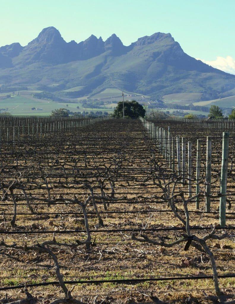 Vineyard Mountains Wine Field Vine  - loyalty / Pixabay